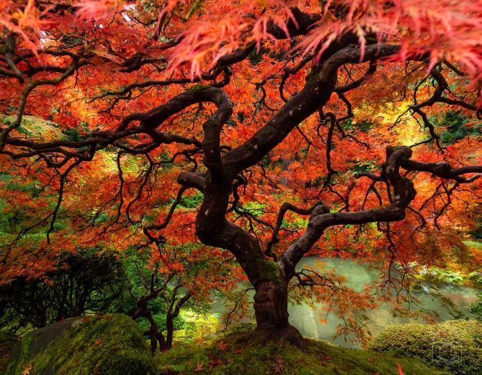 The Tree (alt text)